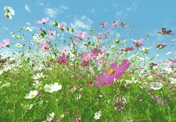 Poster para pared - Flower meadow Enmarcado de laminas
