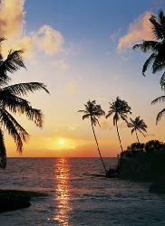 Poster para pared - Tropical sun down Enmarcado de laminas