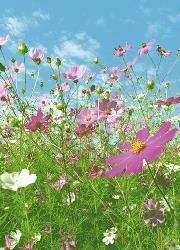 Poster para pared - Flower meadow Enmarcado de laminas