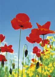 Poster para pared - Poppy field Enmarcado de laminas