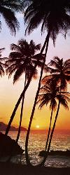 Poster para pared - Sunny palms Enmarcado de laminas
