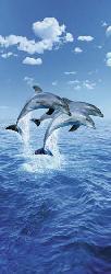 Poster para pared -Three dolphins Enmarcado de laminas