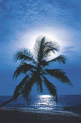 Poster - Moonlight Enmarcado de laminas