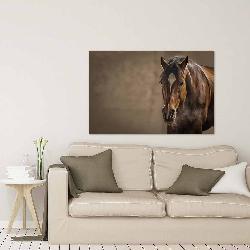 cuadro canvas caballo Marcos y Cuadros