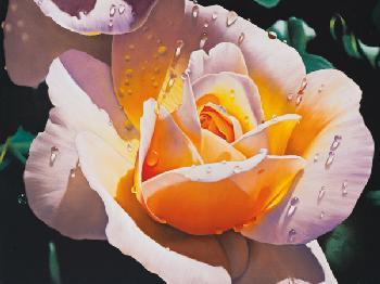 Lamina rosa Enmarcado de cuadros