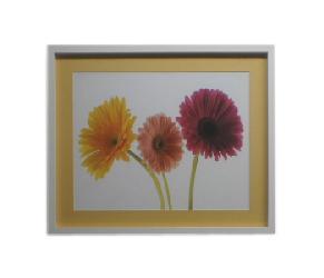 Cuadro - Colorful Daisies Enmarcado de cuadros