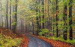Sendero en el bosque Marcos y Cuadros