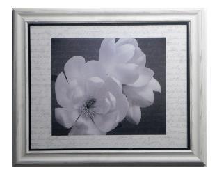 Cuadro - Winter Magnolia (discontinuado) Enmarcado de laminas