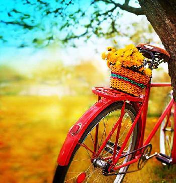 Lamina Bicicleta primaveral Enmarcado de cuadros
