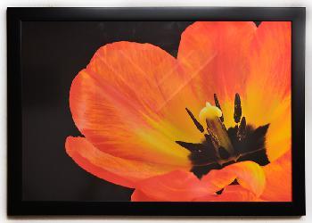 Cuadro Flor Enmarcado de laminas